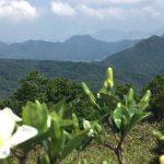 Mountain Peaks - 2 - Walk Hong Kong